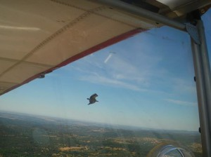 Vistas aéreas - Pájaro